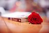 ,, (A.A.A) Tags: red blur love rose photography book bokeh redrose khalifa aaa amna missu irresistible brida abdulaziz althani paulocohelo amnaaalthani
