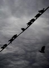 despega (VillegasLillo) Tags: sky clouds contrast pigeon cielo nubes palomas aplusphoto