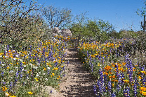 Sutherland Trail Wildflowers