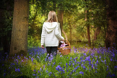 The Enchanted Forest (Stuart Stevenson) Tags: trees nature girl bluebells forest woodland photography scotland woods basket naturallight enchanted springtime cuddlytoy blueflowers bluecarpet filteredlight clydevalley dappledlight naturalised thanksforviewing canon5dmkii stuartstevenson stuartstevenson summertimeuk