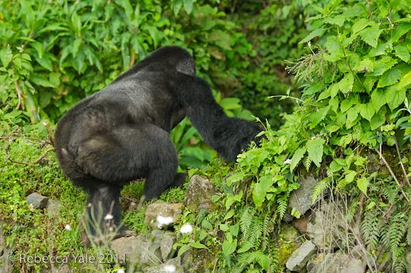 RYALE_Rwanda_Uganda_Safari-64