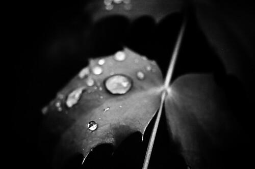 leaf3@macro