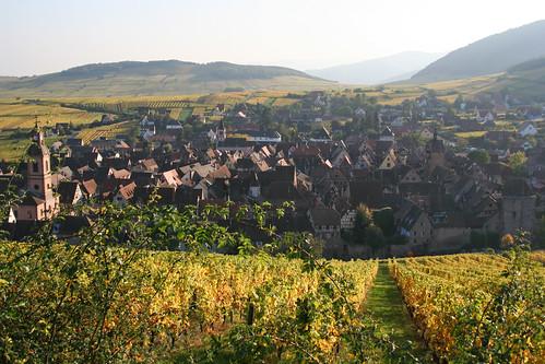Vineyard -4