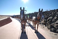 18 Mule and 2 Horse Team, Borox Visitor Center, Boron (janiecrash) Tags: baker boron