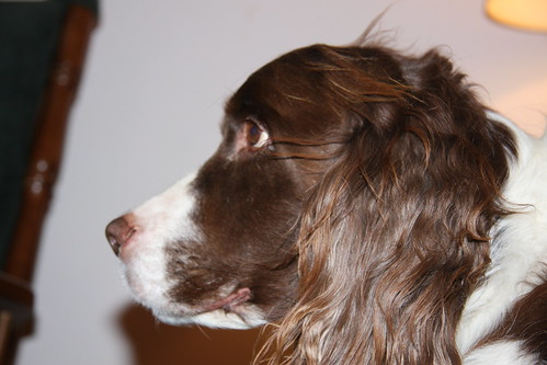 Springer Profile