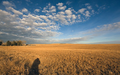 Big sky, long shadow (Craignos) Tags: blue shadow sky field clouds self sunrise big