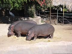 DSC02183 (Fernando Reyes Palencia) Tags: animales paisajesdeguatemala bellospaisajesdeguatemala fotosdeguatemala fernandoreyes guatemalalandscapes fotosfernandoreyes imagenesdeguatemala postalesdeguatemala