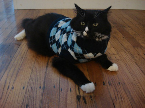 cahrlie the cat in a sweater