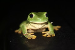 [Free Photo] Animals, Amphibian, Frog, 200807141400