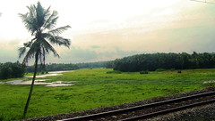 a single tree (Dr. Patrick George) Tags: tree nature clouds coconut railway kerala greenery godsowncountry the4elements