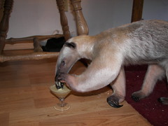 Pua sips her blended martini(Collins)