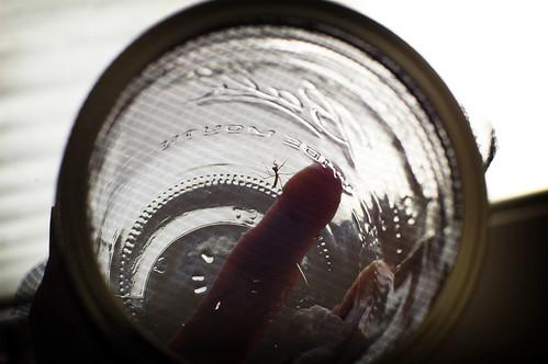 praying mantis in a jar