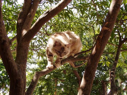 Camilla - In the tree
