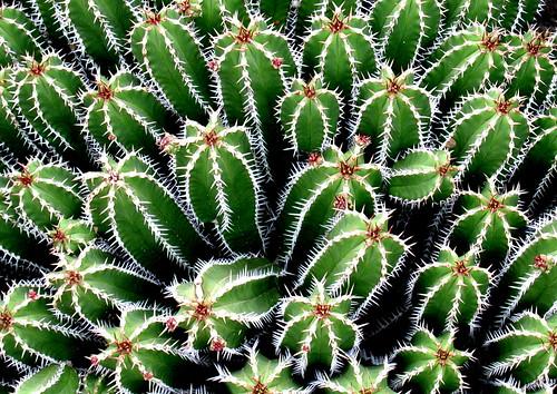 Jardín Botánico de Lanzarote, Fotografía: lcrf