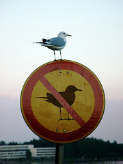 (Sameli) Tags: bird nature animal silhouette sign suomi finland fun rebel cool helsinki funny no seagull gull forbidden meme round seabird onephotoweeklycontest captionable