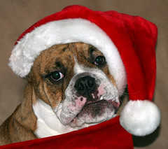 Santa, I've been a good little boy! (Connie Lemperle) Tags: eye searcht