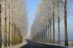 Winter road with trees (!.Keesssss.!) Tags: winter netherlands horizontal landscape outdoors photography frozen day empty nopeople transportation straight baretree countryroad clearsky gettyimages inarow absence treelined royaltyfree beautyinnature nonurbanscene coldtemperature thewayforward theflickrcollection keessmans 0045ksgetty