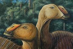 Gryposaurus monumentensis 800teeth