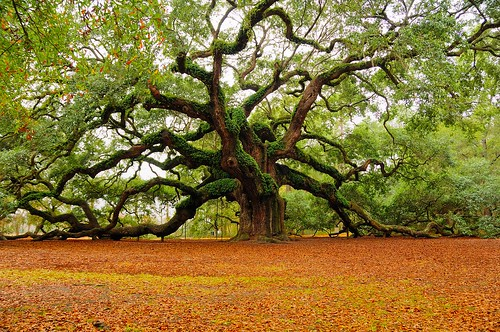 tree of life. Ancient Tree Of Life | Flickr
