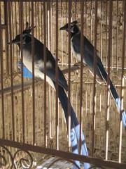 travel blue winter art birds mexico wroughtiron cage adventure pozos
