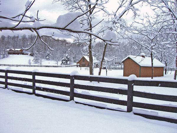 Snowy-paddock