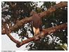 lesser Fish eagle....??! (Naseer Ommer) Tags: birds fauna canon kerala aves southindia valparai vaaz naseerommer malayalikkoottam kfm3 expeditintodewilderness hachaal