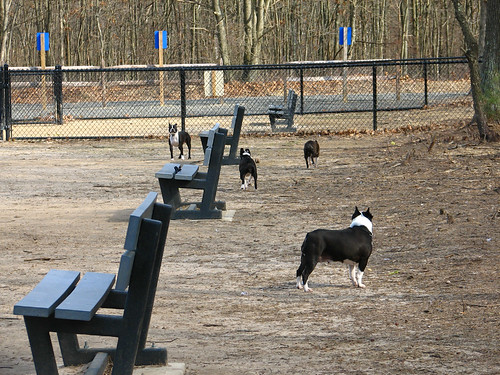 The foursome at the dog park
