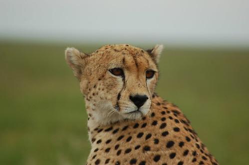 Serengeti, Tanzania por Sara&Joachim.