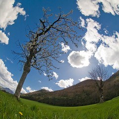 Spring (Denis Messi) Tags: flowers blue sky sun mountain france tree green grass clouds alpes landscape spring fisheye rhone monteynard isre