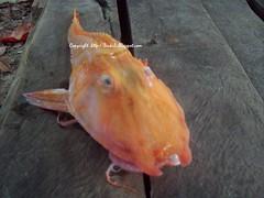 Ura fish 1.0