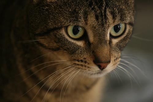 cat house member
