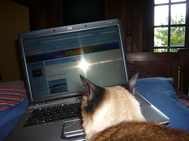 Muffin vendo o blog da Cora by marise caetano