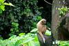 From Taiping With Love.... (phalinn) Tags: kimjongnam taiping kamunting perak darul ridzuan malaysia asia malaysian family kelaurga love beautiful pretty siblings festival raya tahunbarucina chinesenewyear gongxi son wife parents outdoor nature street travel portrait people kids photography wanderlust wanderer explore tourism tour holiday relax cuti jalan zoo animal binatang lakegarden taman tasik cultural culture heritage alam wildlife adventure canon camera eos dslr 5dm4 50mm 85mm 2470mm 815mm bokeh trump media visit 2017 sexy hot wow