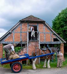 365 day 262 war work 1 (Ruth Flickr) Tags: horse rural work war farming 1940s 365 shire cart reenactment shaft halftimbered granary day262 dsc2028