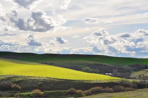 Palouse Fields by Danalynn C