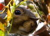 Rodent (*ian*) Tags: tree closeup grey rodent blog squirrel gray favourite interestingness379 bigemrg top400 oct2007blog