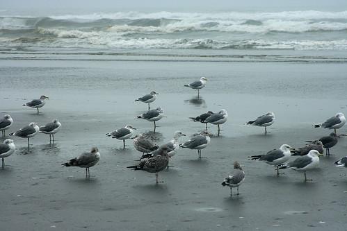 Seagull social
