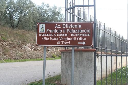 Frantoio in Pigge