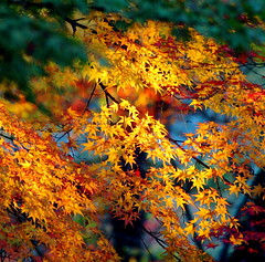 Colours (Jon Christall) Tags: blue autumn trees red orange green fall leaves yellow japan temple maple rainbow kyoto colorful purple fallcolors autumncolours autumncolors momiji japanesemaple   colourful   buddhisttemple nanzenji fallcolours     nanzen aplusphoto colourartaward platinumheartaward
