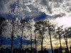 Trees (marlenells) Tags: trees sunset sky silhouette topc25 clouds skyscape interesting topf50 topv333 searchthebest explore fv10 polaris fv15 specnature 25faves alphabetphotomino 100commentgroup