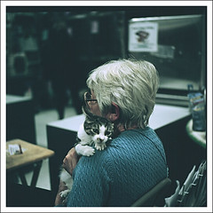 Meow (pyl213) Tags: old film animal cat oldwoman animalshelter adaption yashica124g