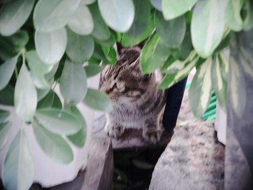 どこにでも猫は居る