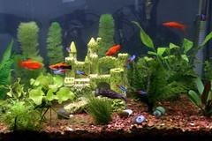 fish aquarium jerseycity jersey
