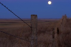 By the light of the silvery moon (Mr.OutdoorGuy) Tags: moon southdakota fence outdoors wire barbedwire prairie barbed dakota moonscape lightofthesilverymoon