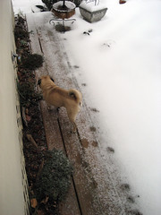 asheville snow 1_17_2008