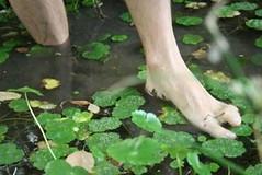 origen (Analía Acerbo Arte) Tags: verde blanco agua pies humano vegetación