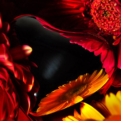 A Valentine Love Letter. (TIO...) Tags: bravo excellence firstquality youareawesome heresmimbrava wheresmimbrava tiosstyle haveagreatandlightfilledday hugsforjuney amasterpieceasalwaysbelatedbirthdaywishesmyfriend youhavemovedme whatablazeofpassion suchwonderfulandmovingwords tendersensitive sensuouswiththereflectionsoftheincendiarycolors inaweofyourimageandwords