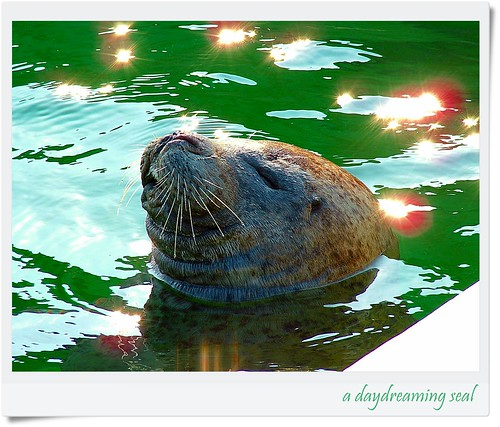 """""""a daydreaming seal"""" aPicaDay020 by friendsofarnon, on Flickr"""