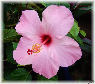 Shades of Pink........