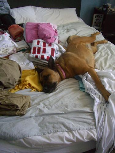Laundry Lola